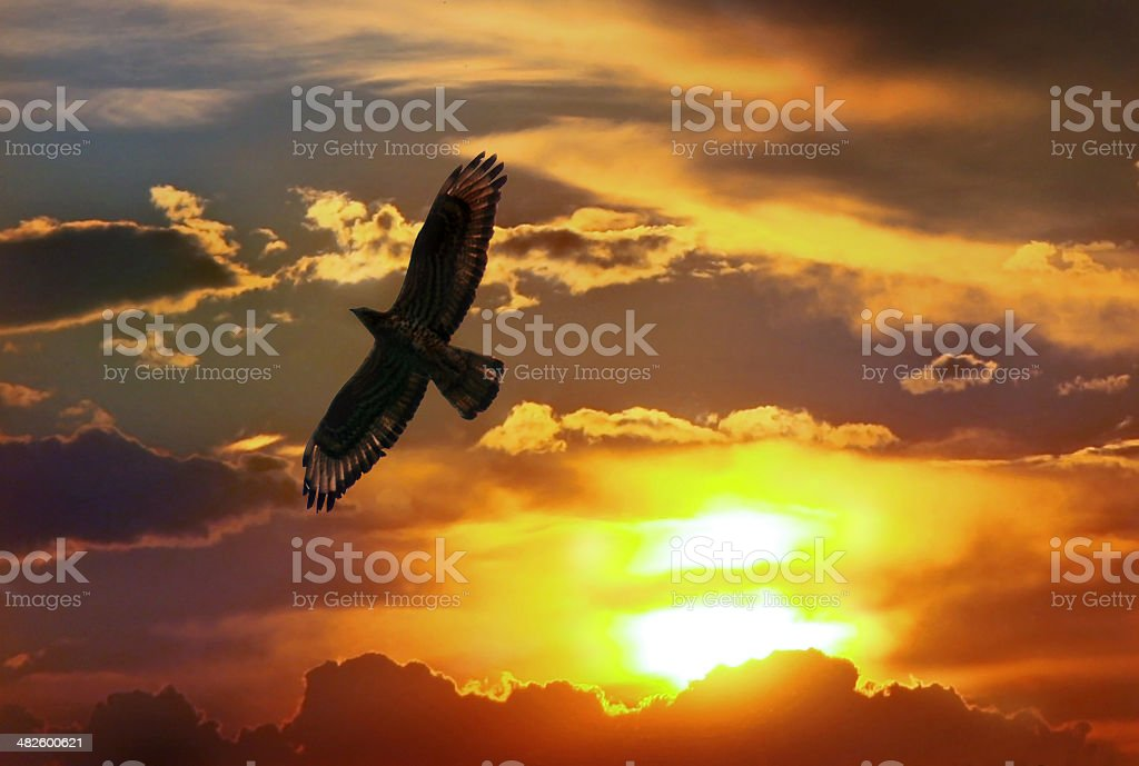 Eagle in sunset the sky stock photo