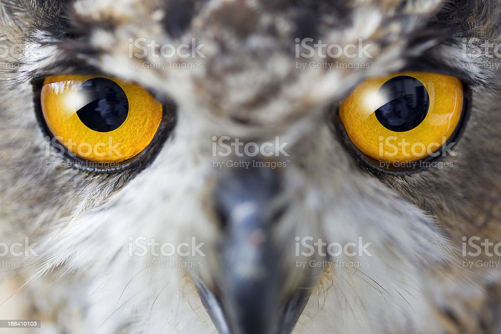 Eagle owl details of eyes stock photo