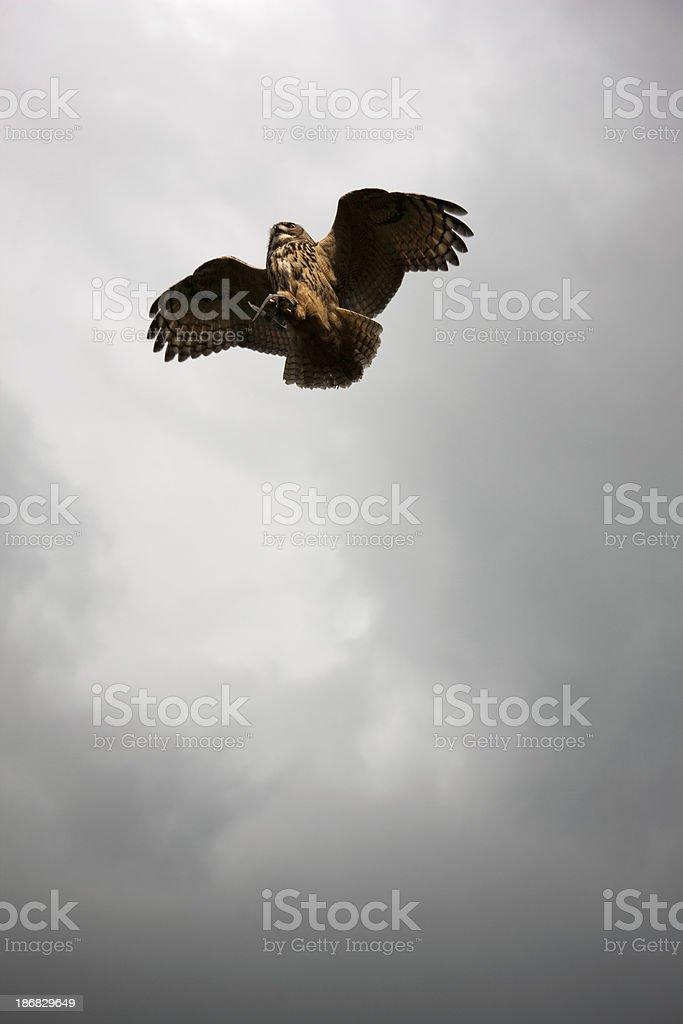 Eagle owl in flight stock photo