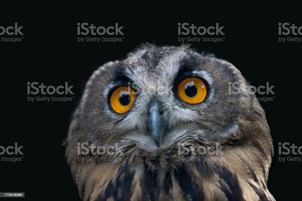 Eagle owl isolated on black stock photo