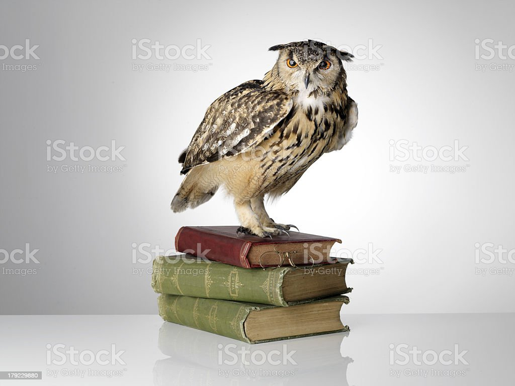 Eagle Owl on Books stock photo