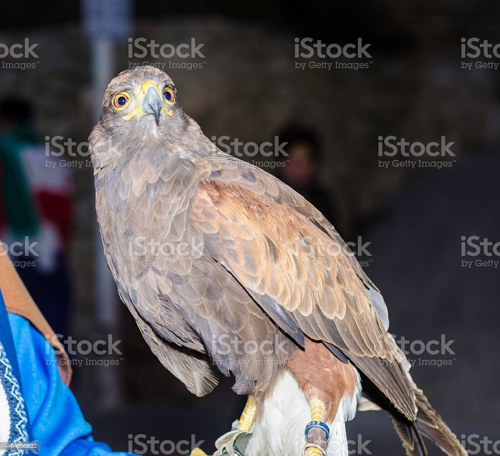Eagle real, in Spain. stock photo