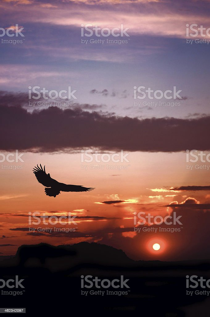 Eagle silhouette flying on dramatic sunset background stock photo