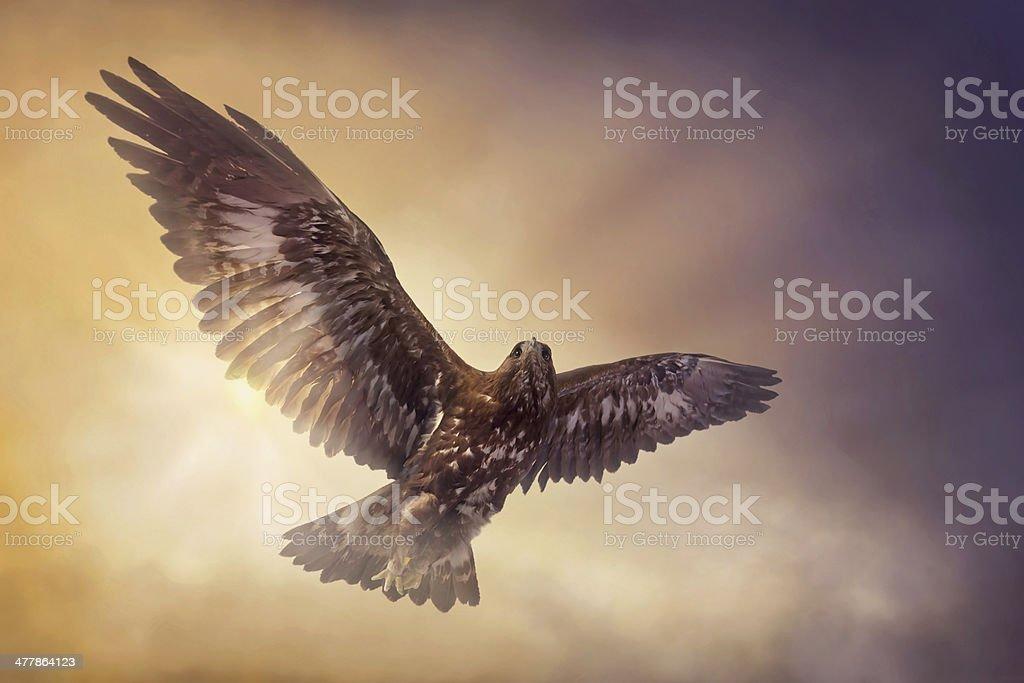 Eagle soaring against a color enhanced sky stock photo