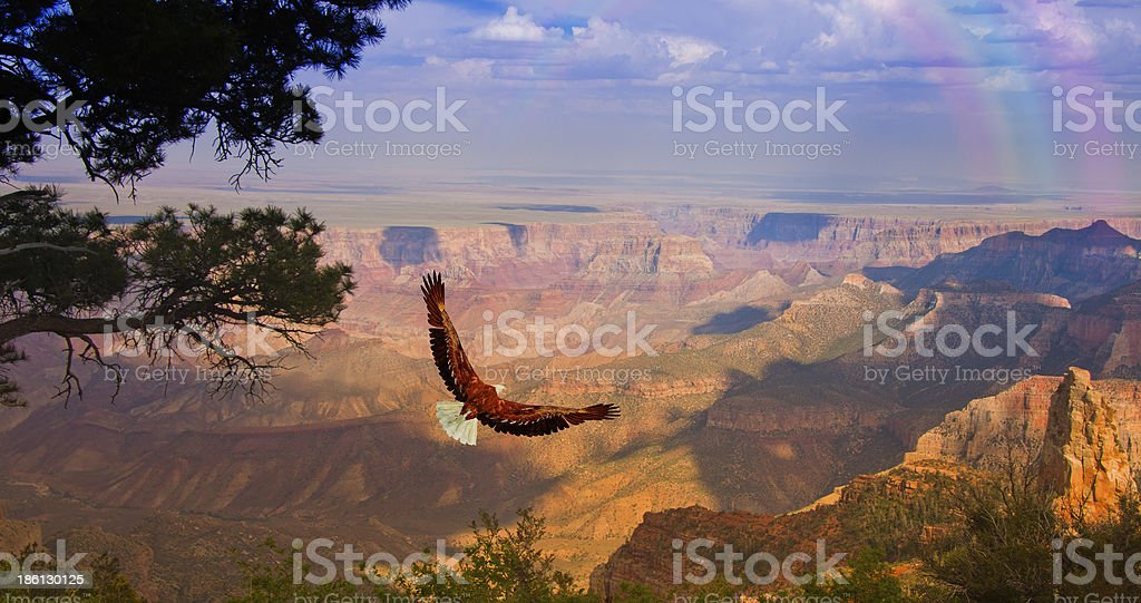 Eagle takes flight over Grand Canyon USA stock photo