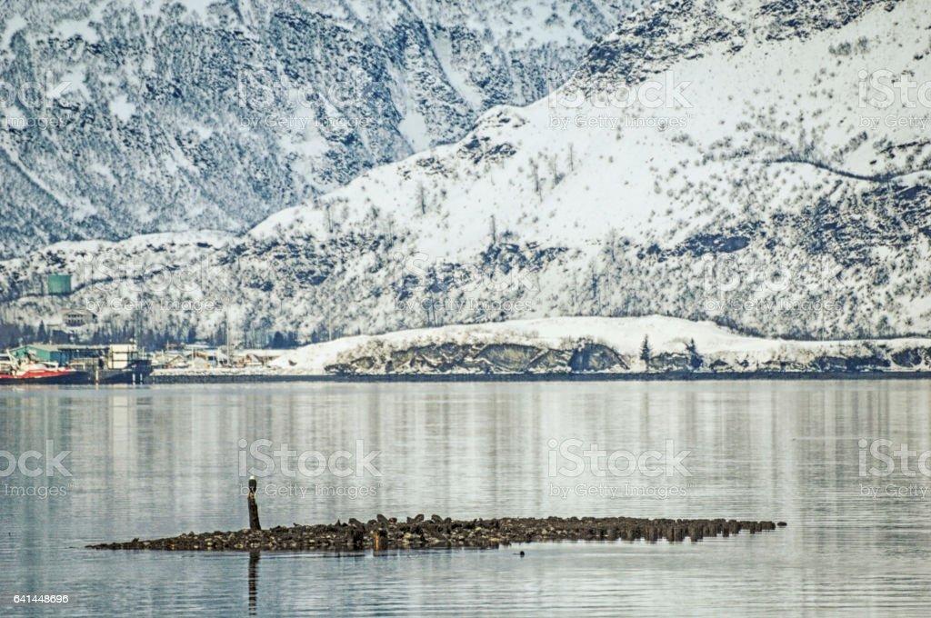 Eagle - Valldez, Alaska stock photo