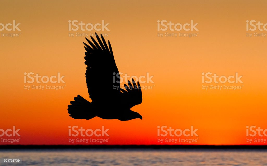 Eagles at Sunset stock photo
