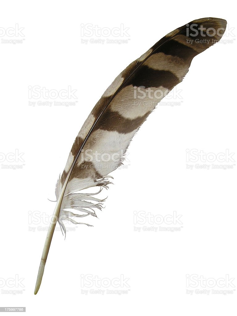 Eagle's feather royalty-free stock photo
