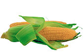 Ear of Corn isolated