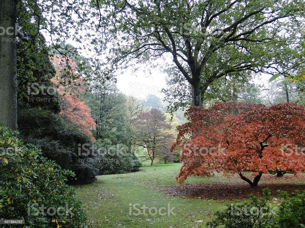 Early Autumn in an Arboretum stock photo