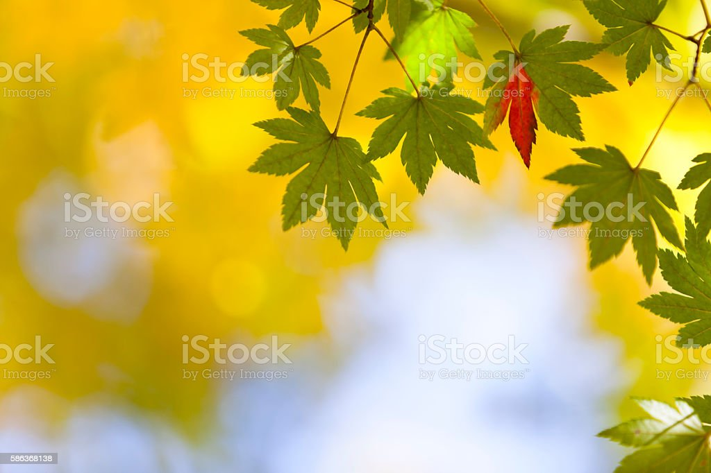 Early Autumn Leaves stock photo