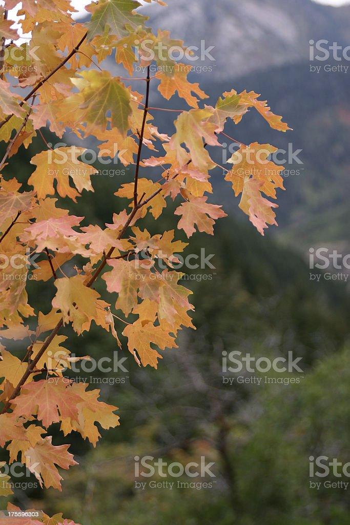 Early Autumn Mountains royalty-free stock photo