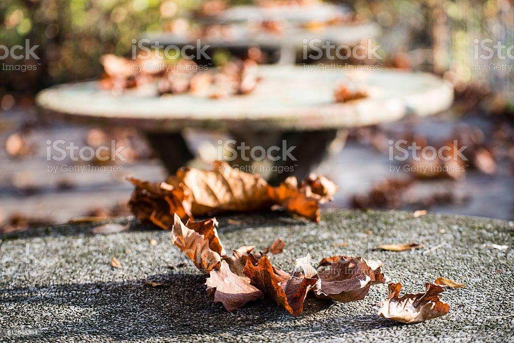 Early Autumn  on stone table stock photo