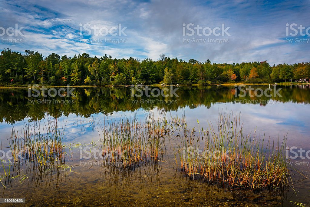 Early autumn reflections and grasses in Toddy Pond, near Orland, stock photo