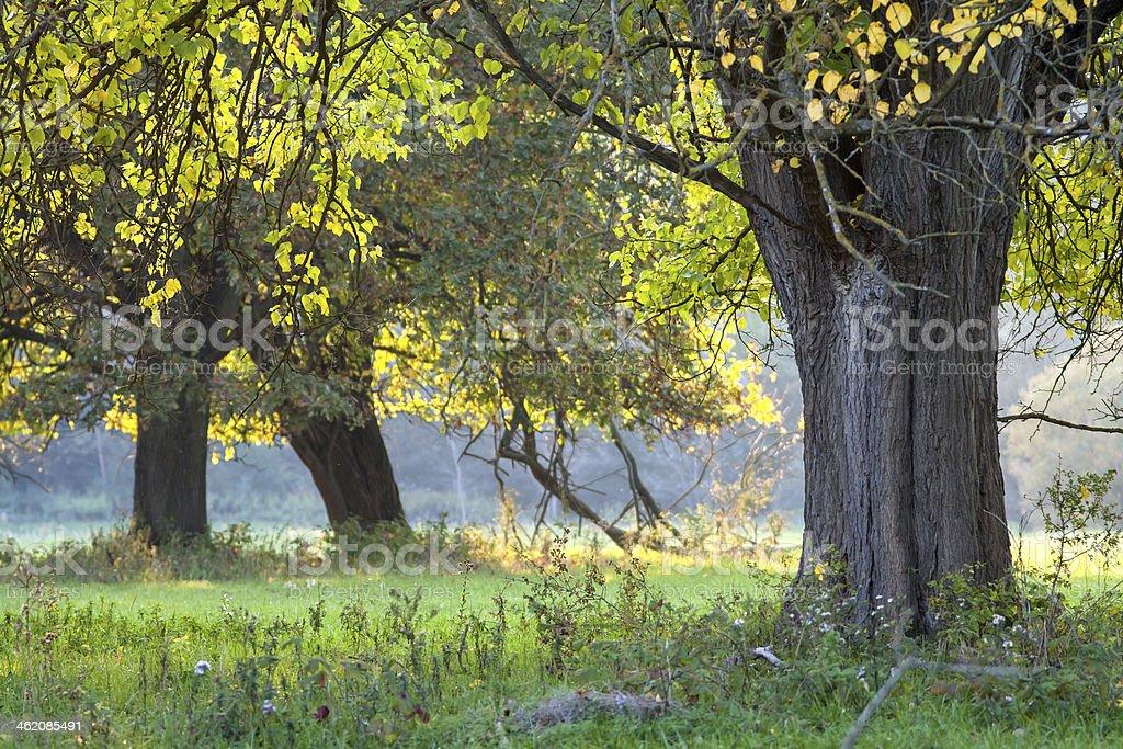 Early autumn tree royalty-free stock photo