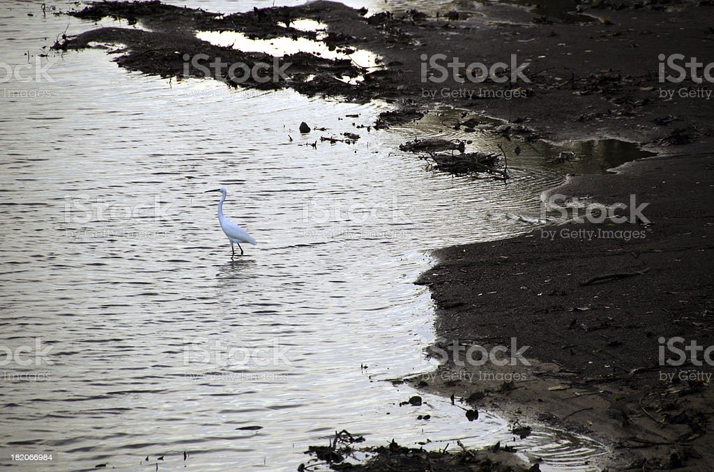 Early Bird Catches the Fish royalty-free stock photo