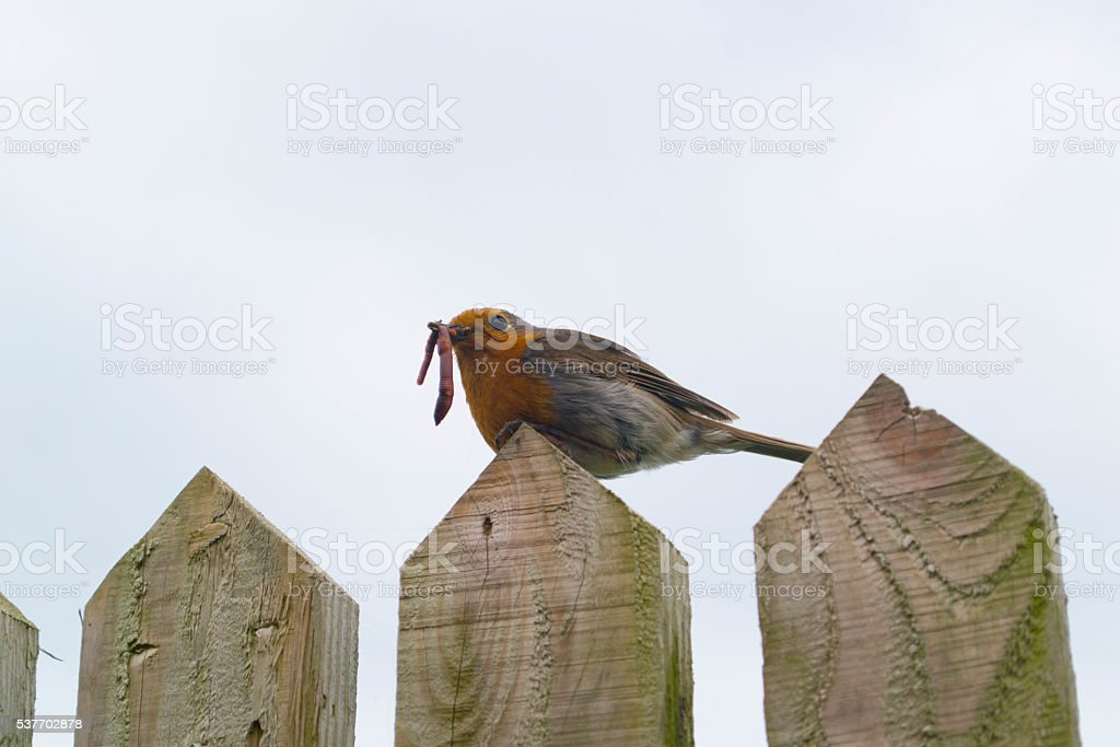 Early bird catches the worm stock photo