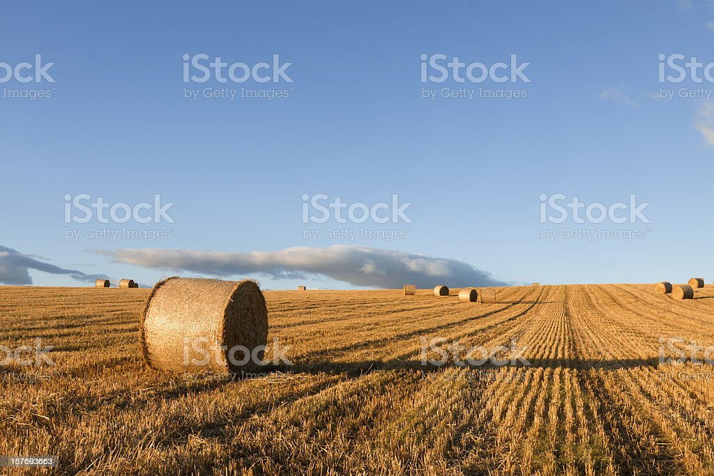 Early Evening Sunlight in a stubblefield. royalty-free stock photo