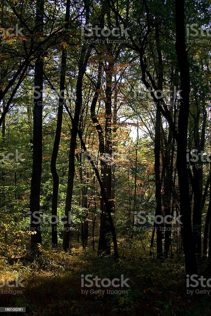 Early Fall Woods, Vertical stock photo
