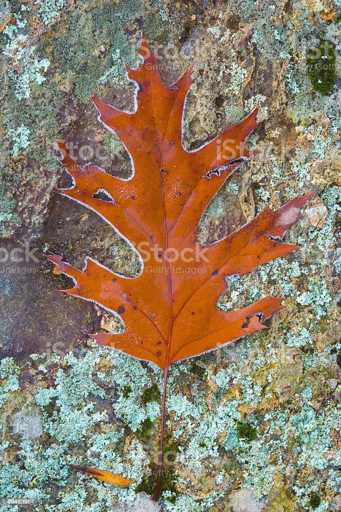 Early Frost in late Fall royalty-free stock photo