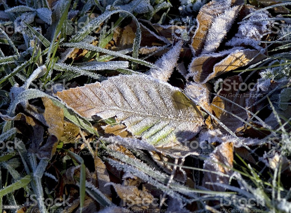 Early Frost in the Blue Ridge Mountains royalty-free stock photo