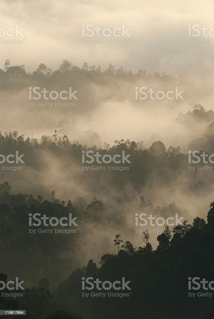 early in the morning misty forest stock photo
