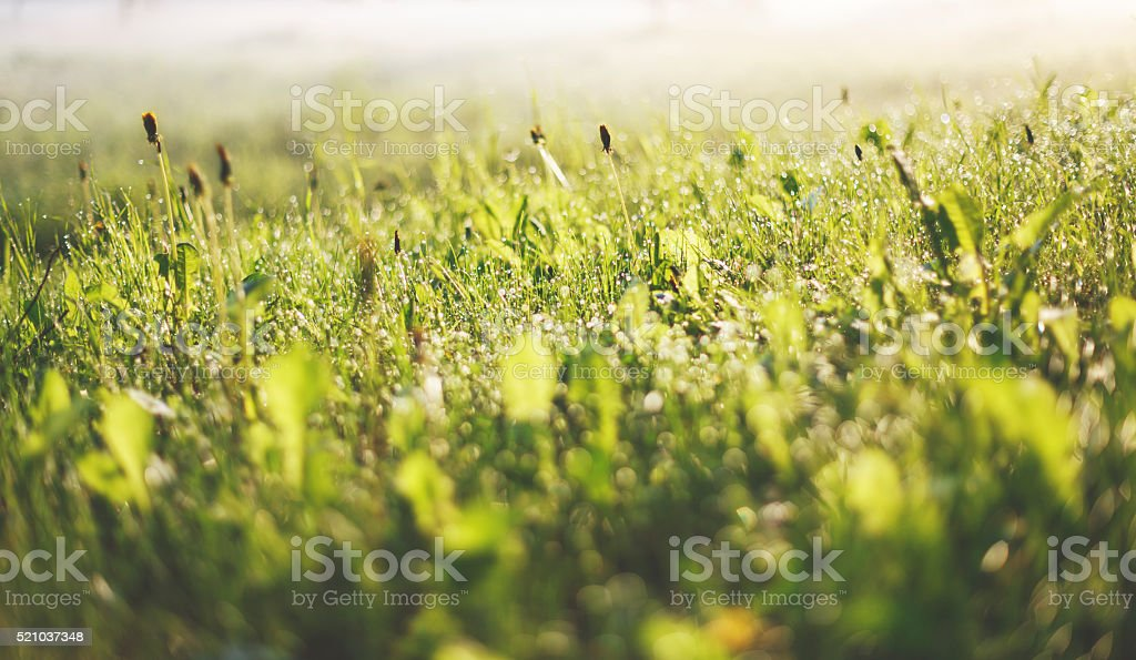 Early misty morning on a wild meadow stock photo