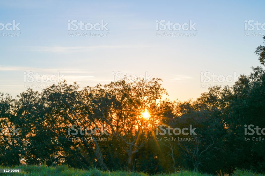 Early monring sun bursts through trees on top of rise stock photo