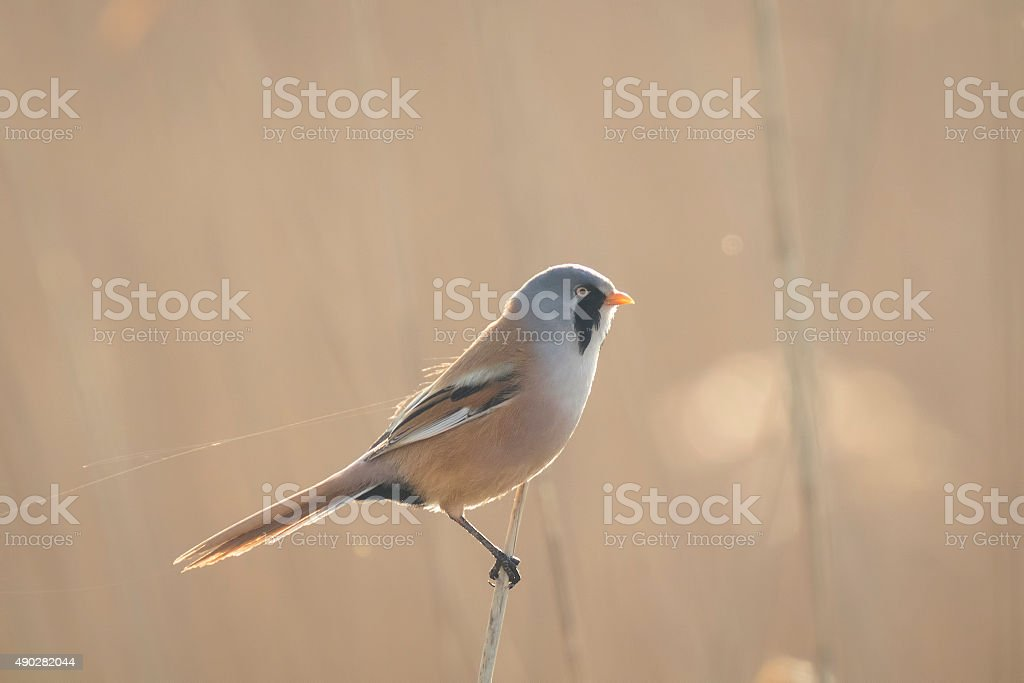 Early morning bird stock photo