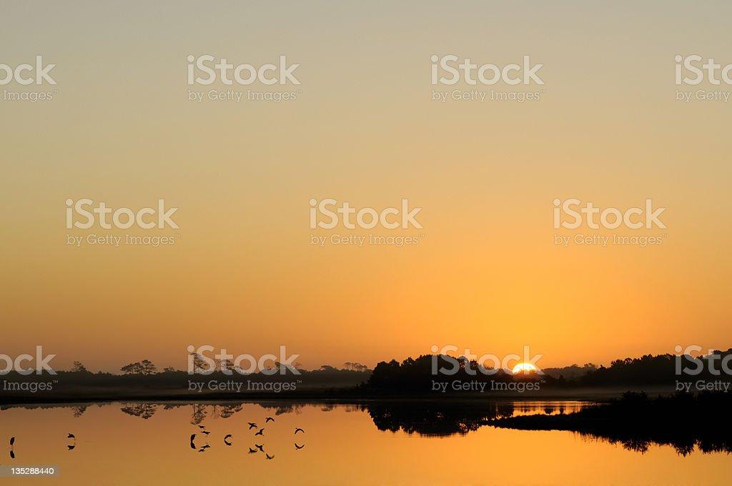 Early Morning Flight stock photo