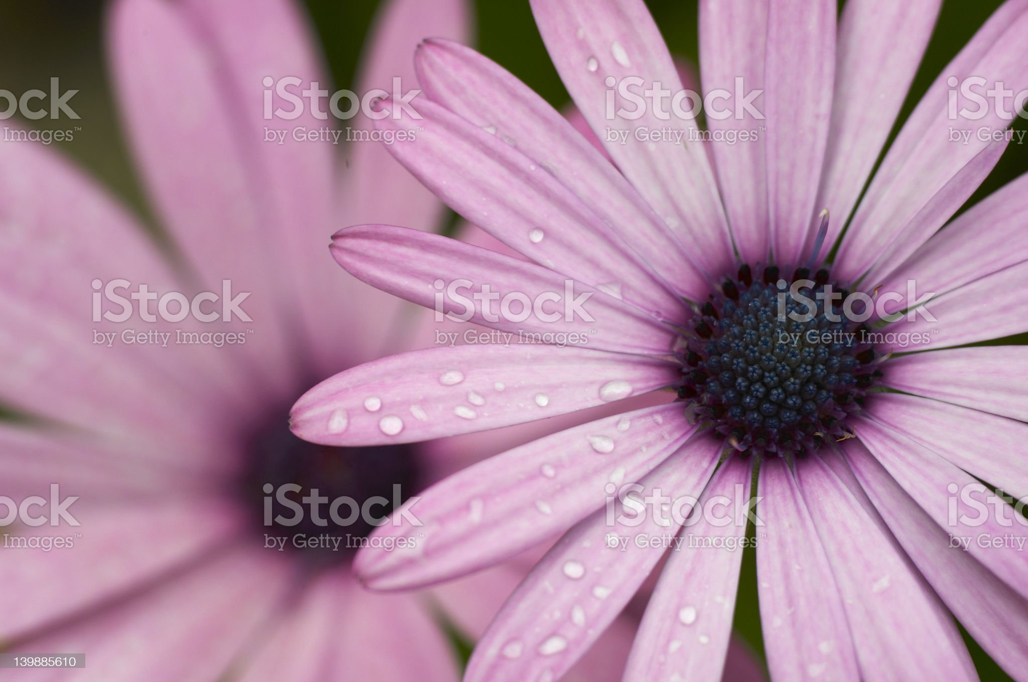 Early Morning Flowers royalty-free stock photo