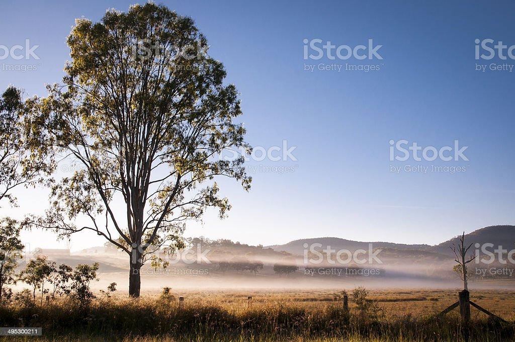 Early morning fog royalty-free stock photo