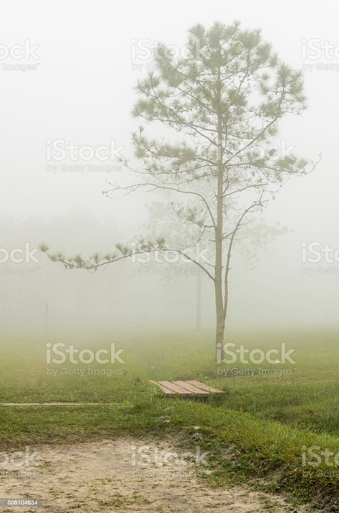 Early morning fog, stock photo