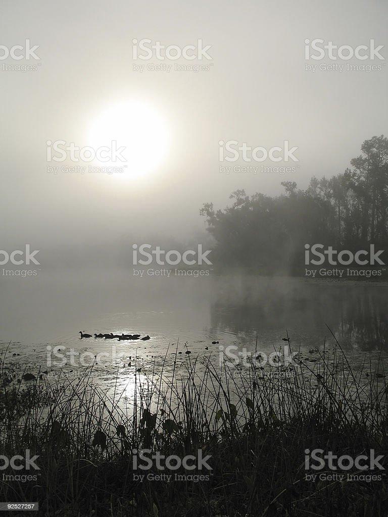 Early Morning Foggy Lake royalty-free stock photo