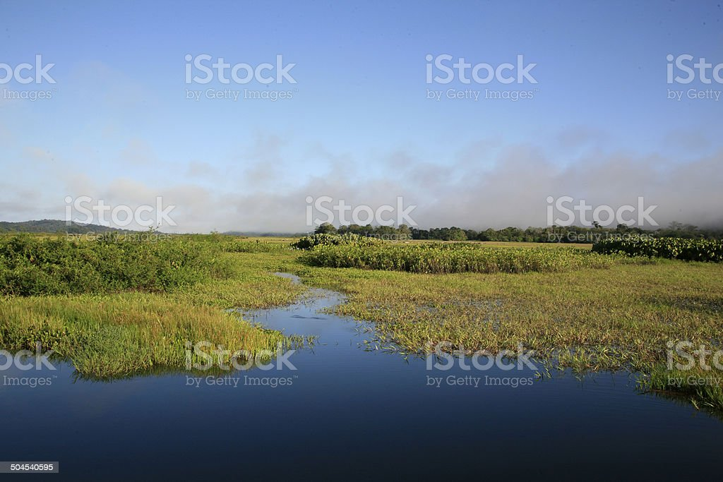 Early morning in Kaw-Roura National Nature Reserve, French Guina stock photo