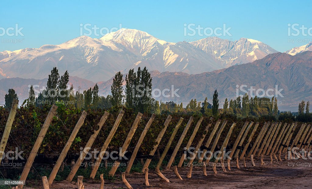 Early morning in the late autumn in Mendoza, Argentine stock photo