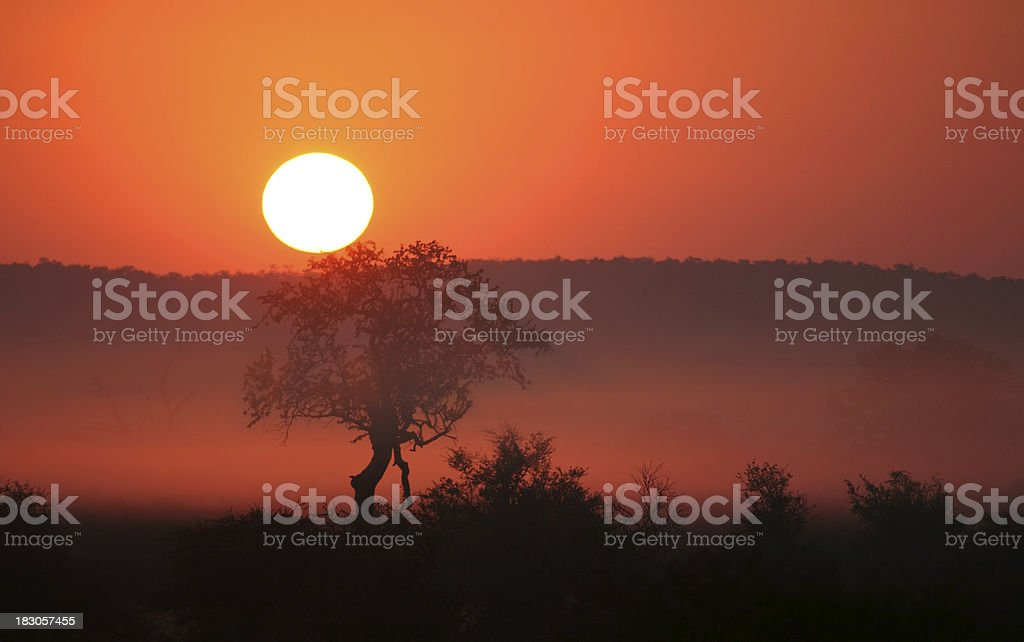 Early morning misty African sunrise or sunset, with silhouetted tree. royalty-free stock photo
