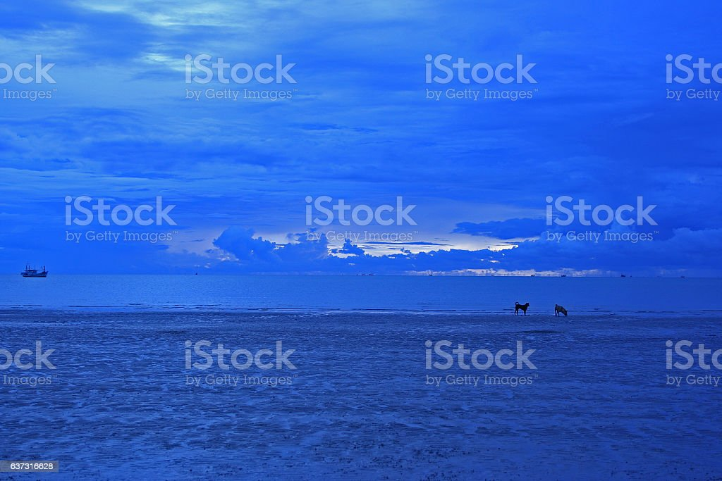 Early morning on the sea with a couple dogs stock photo