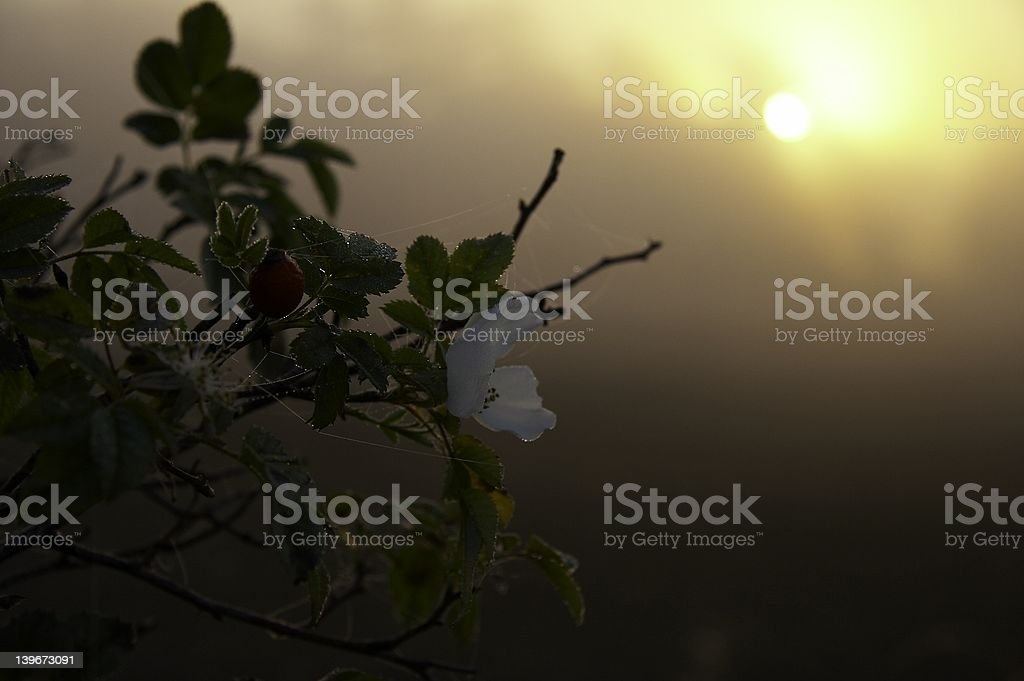 early morning royalty-free stock photo