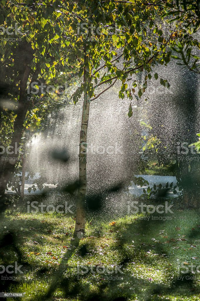 Early morning stock photo