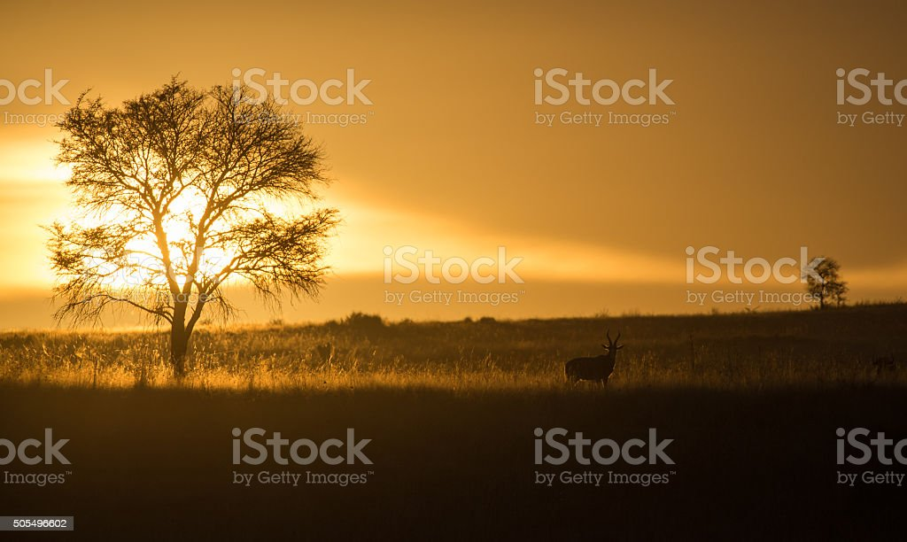 Early morning sun breaks through clouds stock photo