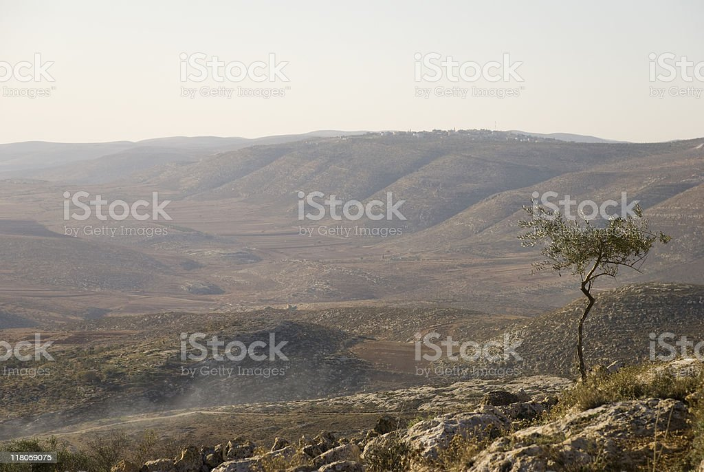 Olive Tree and West Bank hills near Nablus, Palestine royalty-free stock photo