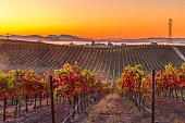 Early Morning Vieyard in Napa Valley California