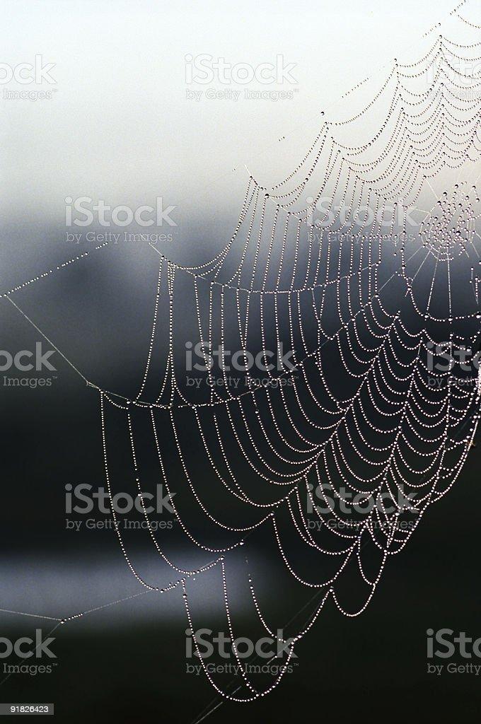 early morning web royalty-free stock photo