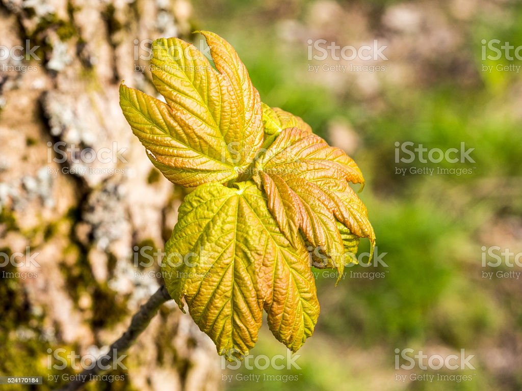Early signs of spring stock photo