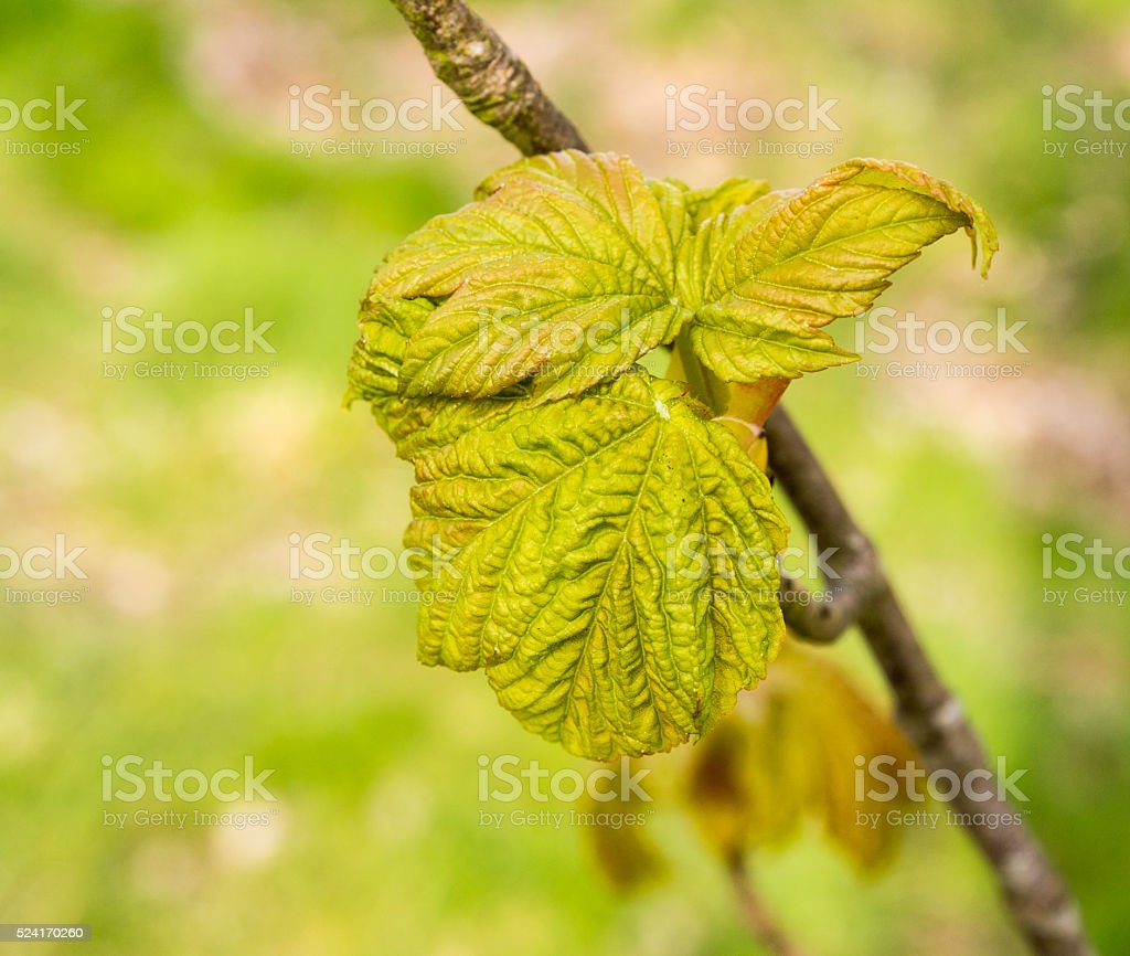 Early signs of spring with tree stock photo