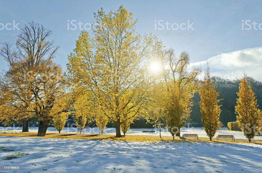 early snow in October stock photo