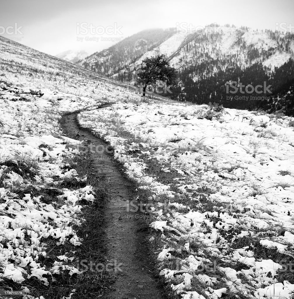 Early Snow royalty-free stock photo