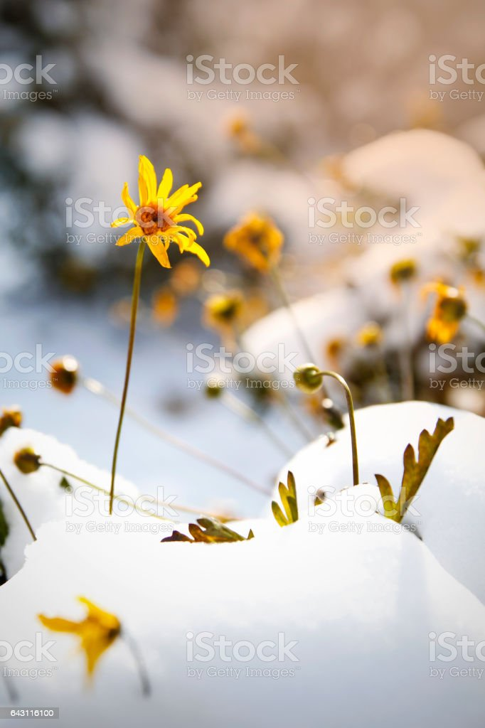 Early Spring Flowers stock photo
