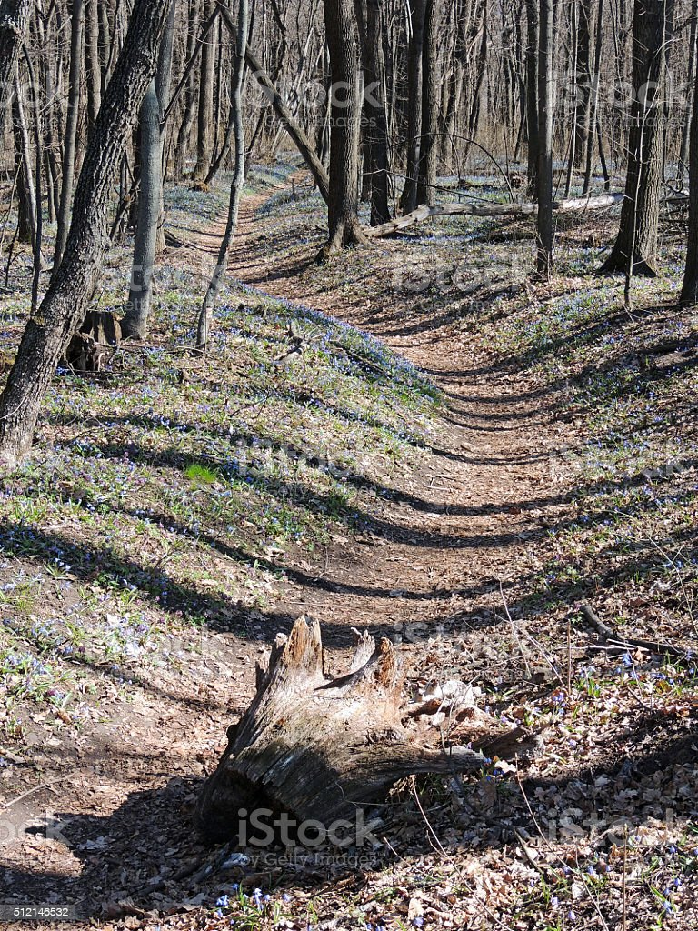 Early spring forest path among snowdrops stock photo